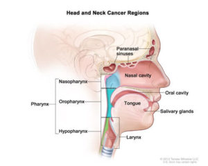 headandneck-diagram